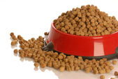 Bowl of dog kibble overflowing in dog dish — Stock Photo