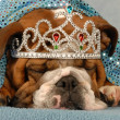 English bulldog wearing princess tiara peaking — Stock Photo