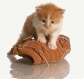 Six week old kitten standing on a baseball glove — Stock Photo