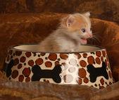 Kitten sitting in a pet food dish — Stock Photo