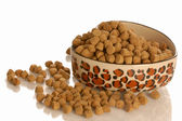 Bowl of dog kibble in a heart shaped dog dish — Stock Photo
