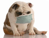 Sick or contagious dog — Stock Photo