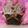 Stock Photo: Adorable pug dressed up as princess