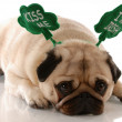 St. patricks day - pug wearing kiss me im irish headband - Stock fotografie