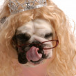 Dog dressed up with blonde wig and tiara — Stock Photo #24176543
