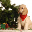 Stock Photo: Americcocker spaniel puppy sitting beside christmas tree