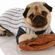 Pug dog dressed up in baseball uniform with ball glove — Stock Photo #24177199