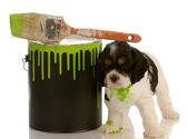 Mischievous american cocker spaniel puppy with green paint can — Stock Photo
