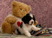 American cocker spaniel puppy with slippers and teddy bear — Stock Photo