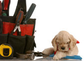 American cocker spaniel laying beside construction tools — Stok fotoğraf