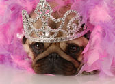 Adorable pug dressed up as a princess — Stock Photo