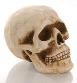 череп скелет с отражением изоляции — Стоковое фото