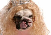 Dog dressed up with blonde wig and tiara — Zdjęcie stockowe
