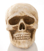 Skull skeleton — Stock Photo