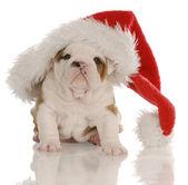 Cuatro semanas de edad bulldog inglés cachorro disfrazado de santa — Foto de Stock