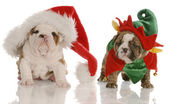 Four week old english bulldog puppies dressed up as santa and an elf — Zdjęcie stockowe