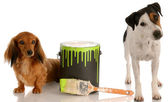 Dachshund and jack russel terrier with paint can — Stock Photo
