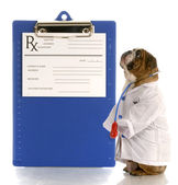 English bulldog dressed up as a doctor or veterinarian with prescription pad — Stock Photo