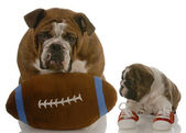 Teaching puppy how to play football — Stock Photo