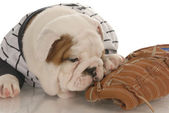 English bulldog puppy wearing jearsey chewing on baseball glove — Stock Photo