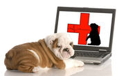 Looking for animal health information online — Stock Photo