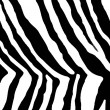 Details of a black and white animal print - Stock Photo
