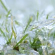 Blades of green grass with a thick layer of ice - after an ice storm - Stock Photo