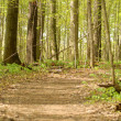 Pathway in a early springtime forest - Stock Photo