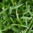 Cut grass background with shallow depth of field — Stockfoto