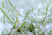 Blades of green grass with a thick layer of ice - after an ice storm — Stock Photo