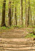 Pathway in a early springtime forest — Stockfoto