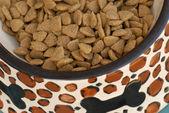 Bol plein de nourriture pour chiens dans un plat en céramique — Photo