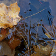 Yellow maple leaf floating on thin autumn ice - Stock Photo