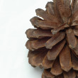 Close up details on pine cones with white background - Stock Photo