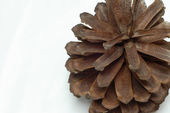 Close up details on pine cones with white background — Stock Photo