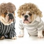 Humanized dogs — Stock Photo