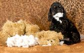 Naughty puppy — Stock Photo