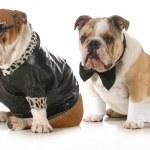 Dog couple — Stock Photo #26469683