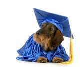 Dog obedience training — Stock Photo