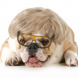 Funny dog — Stock Photo