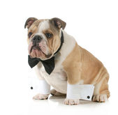 Handsome dog — Stock Photo