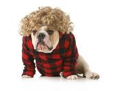 Redneck dog — Stock Photo