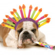 Birthday dog — Stock Photo #30496409