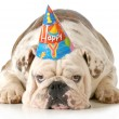 Sad birthday dog — Stock Photo