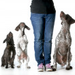 Woman and her dogs — Stock Photo #37078729
