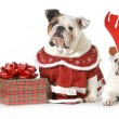 Christmas pets — Stock Photo #37078749