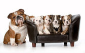 Dog family — Stock Photo