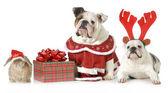 Christmas pets — Stock Photo