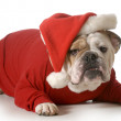 Dog santa — Stock Photo #38309331