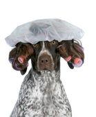 Dog grooming — Stock Photo